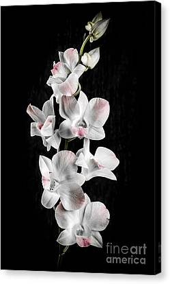 Orchid Flowers On Black Canvas Print
