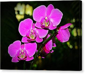 Orchid Flutter Canvas Print by Liudmila Di
