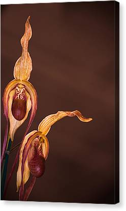 Orchid Greeting Canvas Print