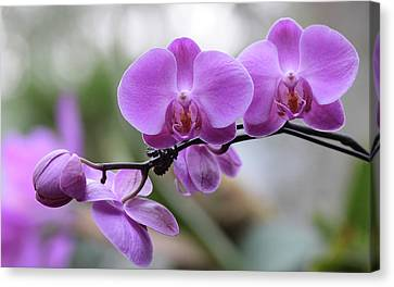 Canvas Print featuring the photograph Orchid In Bloom by Harold Rau