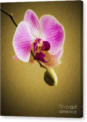 Orchid In Digital Oil Canvas Print