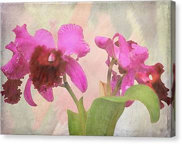 Orchid In Hot Pink Canvas Print by Rosalie Scanlon