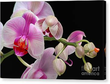 Canvas Print featuring the photograph Orchid by JRP Photography