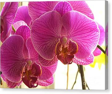 Canvas Print featuring the photograph Orchid by Lingfai Leung