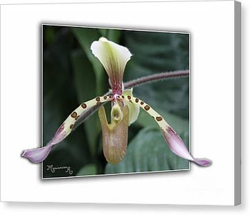 Orchid Canvas Print by Mariarosa Rockefeller