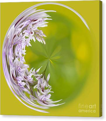 Sphere Canvas Print - Orchid Moon by Anne Gilbert
