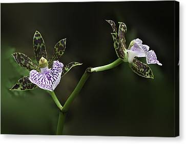 Canvas Print featuring the photograph Orchid by Ram Vasudev