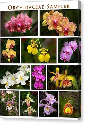 Orchid Sampler Canvas Print by Dana Sohr