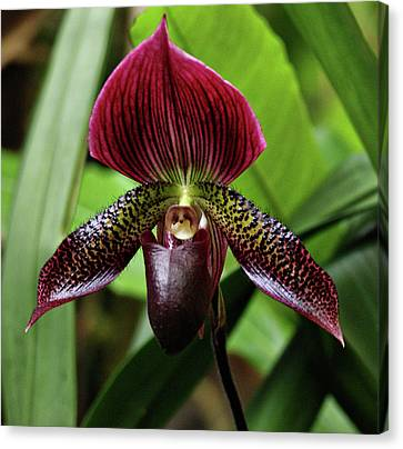 Orchid Canvas Print by Sandy Keeton