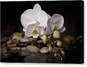 Garden Flowers Canvas Print - Orchid - Sensuous Virtue by Tom Mc Nemar