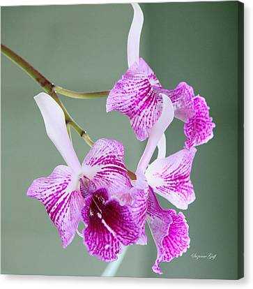Orchid Series II Canvas Print