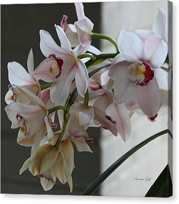 Orchid Series Iv Canvas Print by Suzanne Gaff