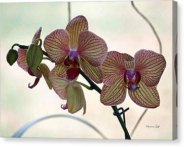 Orchid Series Vi Canvas Print