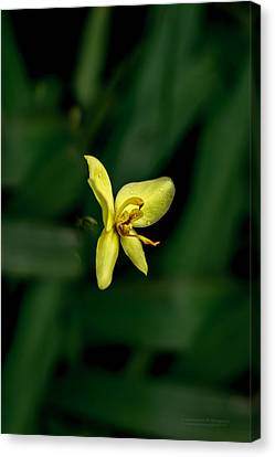 Orchid Suspense  Canvas Print