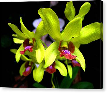 Orchid. Tenerife. Canary Islands. Canvas Print by Andy Za