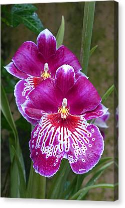 Canvas Print featuring the photograph Orchid Twins by Cindy McDaniel