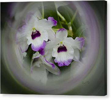 Orchid Wine Swirl Canvas Print by Penny Lisowski