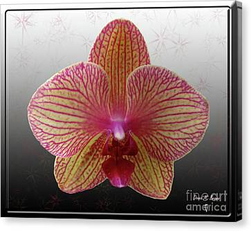 Canvas Print featuring the photograph Orchid  With Stars by Donna Brown