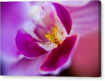 Orchide Detail Canvas Print by Kim Lagerhem