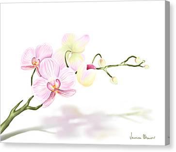 Orchidea Canvas Print by Veronica Minozzi