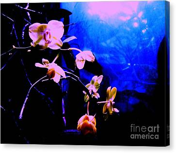 Orchidia Canvas Print by Vanessa Palomino