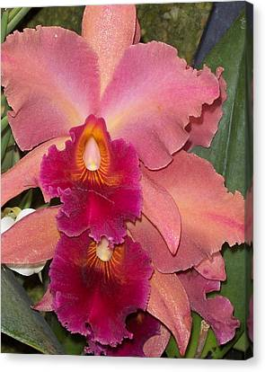 Orchids 4 Canvas Print by David Nichols