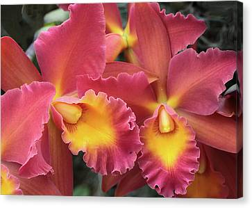 Canvas Print featuring the photograph Orchids Ablaze by Harold Rau