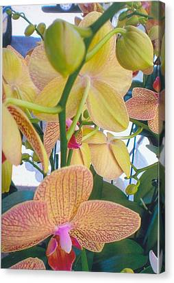 Orchids And Buds Canvas Print