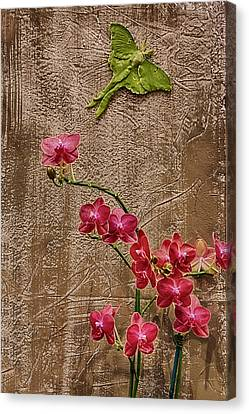 Orchids And Butterfly Canvas Print by John Haldane