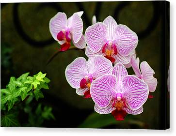 Orchids And Ivy Canvas Print by Trina  Ansel