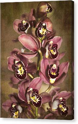 Orchids - Cymbidium  Canvas Print by Kerri Ligatich