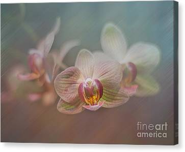 Orchids In The Mist Canvas Print by John Kain