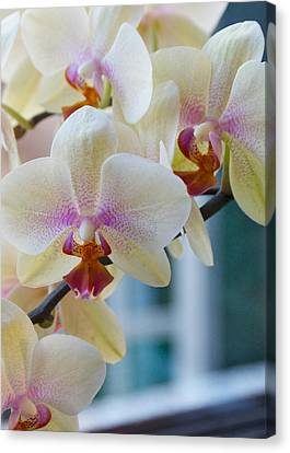 Orchids In The Morning Light Canvas Print by Debbie Karnes