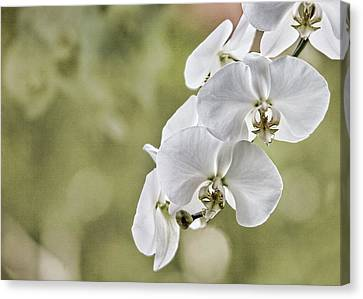 Orchids Canvas Print by Karen Walzer