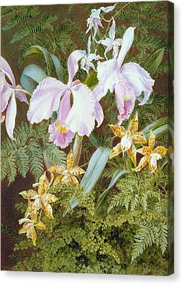 Purple Flowers Canvas Print - Orchids by Marian Emma Chase