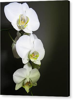 Orchids On Gray Canvas Print