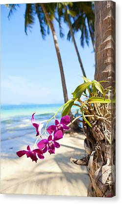 Orchids On The Beach Canvas Print