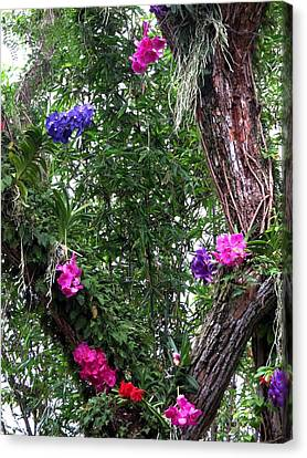 Orchids On The Tree Canvas Print by Zina Stromberg