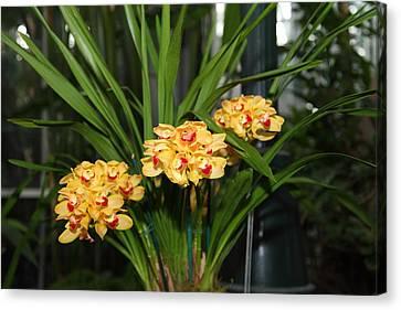 Orchids - Us Botanic Garden - 01137 Canvas Print by DC Photographer