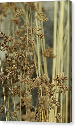 Canvas Print featuring the photograph Oregano In Winter by Rebecca Sherman