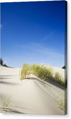 Oregon Dunes Canvas Print by Charmian Vistaunet