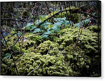 Oregon Forest Floor Canvas Print