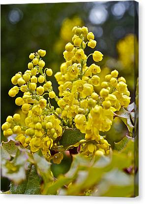 Canvas Print featuring the photograph Oregon Grape Blossoms by Todd Kreuter