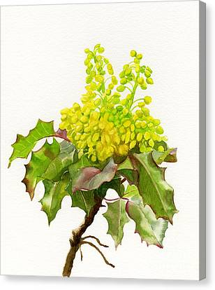 Oregon Grape White Background Canvas Print by Sharon Freeman