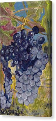 Oregon Grapes Canvas Print by Nick Vogel