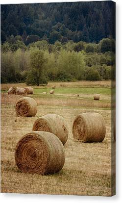 Oregon Hay Bales Canvas Print by Carol Leigh