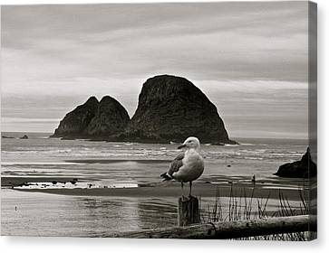 Oregon Shorebirds Canvas Print