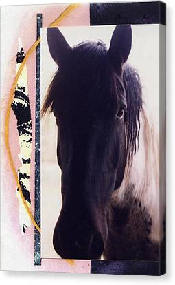 Canvas Print featuring the photograph Oreo by Mary Ann  Leitch