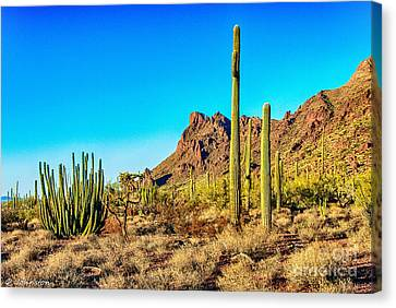 Organ Pipe Cactus National Monument Late Afternoon Canvas Print by Bob and Nadine Johnston