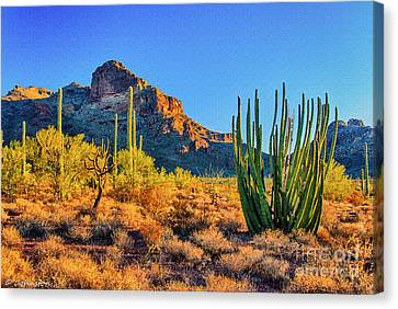 Organ Pipe Cactus National Monument Sunset Canvas Print by Bob and Nadine Johnston